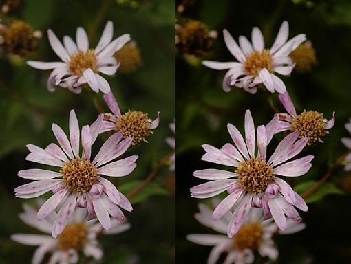 flowerB_A.jpg